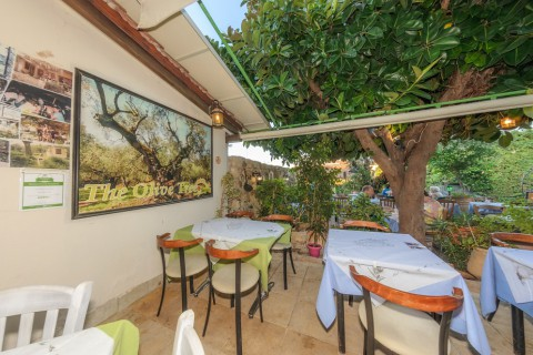The Olive Tree Taverna
